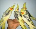 Παπαγάλοι - Φιλοπάππου
