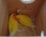 Παπαγάλοι - Νέα Ιωνία