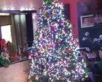 Χριστουγεννιάτικο Δέντρο Αμερικάνικο - Παλαιό Φάληρο