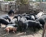 Ζώα - Υπόλοιπο Αττικής