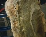 Μελι Βελανιδιας - Νομός Φθιώτιδας