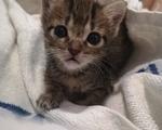 Χαριζεται γατακι ζωγραφιστό - Υπόλοιπο Αττικής